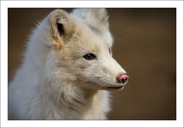 White Fox by Eman333