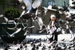 The Queen of The Pigeons