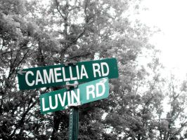 Loving Camellia by priceless-clutter