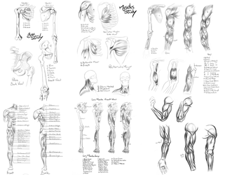 Anatomy Reference by Khem-Art