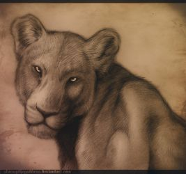 Lioness by Rudranee