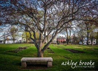 -- The Giving Tree -- by AshleyxBrooke