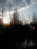 Where the beavers once lived.. by JKBH