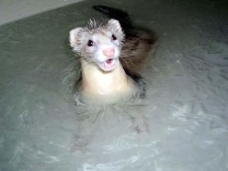 Loch Ness... Ferret? by HappinessIsAWarmGun