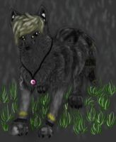 PC walking in the rain by CanineCriminal