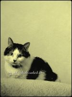 563 by evy-and-cats
