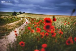 Poppy path by Dybcio