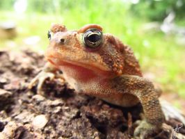 Morning Toad by VorpalBeasta