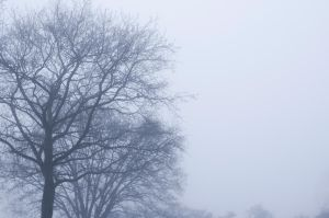 Photo: Fog by Mariesen