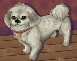 Mary the Lhasa Apso Dog by EmilyCammisa