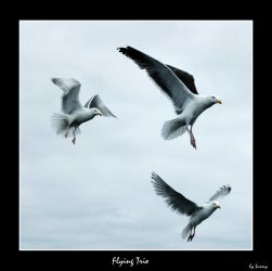 Flying trio by grugster