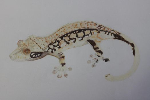 WIP Crested Gecko by beachgecko