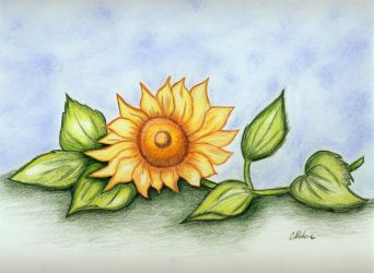 Sunflower by ayaseXD