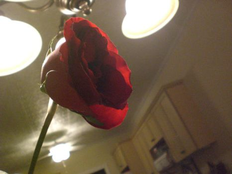 Just a Rose by blairbrefeld