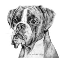 Boxer boy in graphite by LeontinevanVliet
