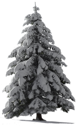 Christmas Tree Snow for my watcher ~ STOCK by AStoKo