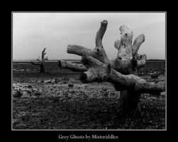 Grey Ghosts 1 by misteriddles