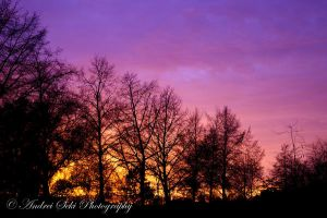 Sunset Beyond the Trees by andrei-seki