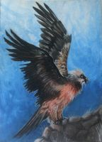 ACEO: Woodswallow by Saraais