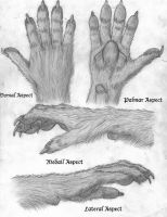Canid Hand Concept by RussellTuller