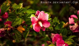 Another pink flower by ksouth