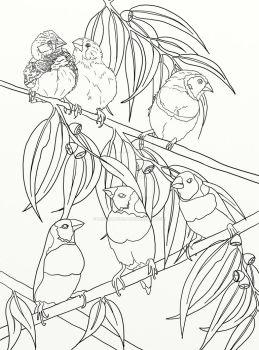 Page 21 of Australian Birds Adult Coloring Book by LorraineKelly