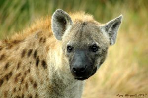 Spotted Hyena by aggz-w