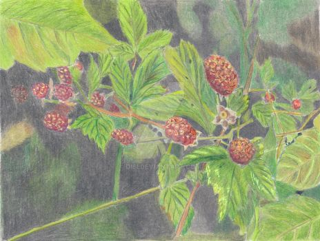 Wild Blackberries by Di6i