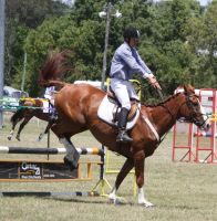 STOCK Showjumping 417 by aussiegal7