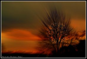 The startled tree. by Bermiro