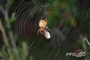 Spider On The Web by pfgun0