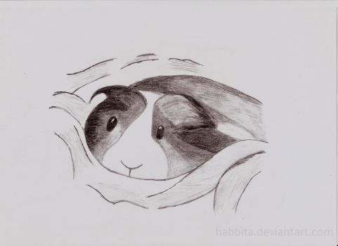 Boceto de mi cobaya [Sketch of my guinea pig] by Habbita