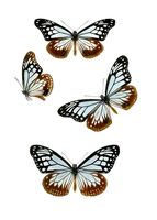 1800's Insects 15 PNG by chaseandlinda