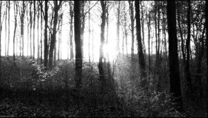 Last light in the forest by sirlatrom