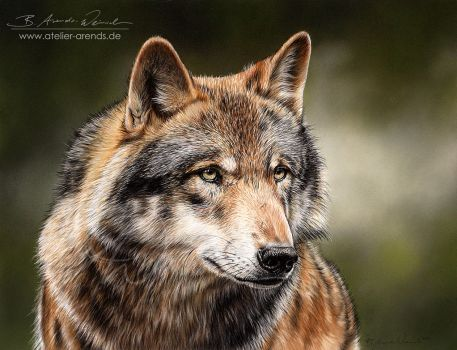 Wolf fixed to his prey. by AtelierArends
