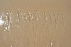 Sand Trees by the-denied