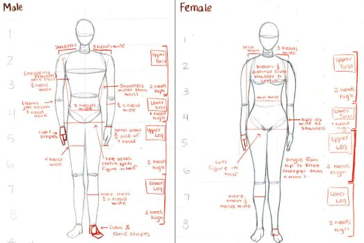 Male and Female Anatomy by lei-x