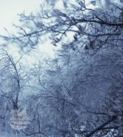 Ice Trees-Ice Storm Photo 2 by SammanthaAus