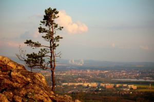View to the City behind of a Conifer by LoveForDetails