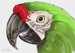 Macaw With  Noise by Reptangle