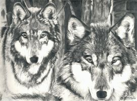 Wolves by chandito