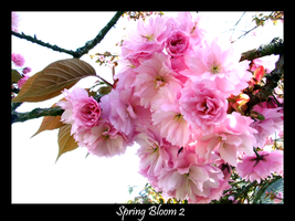 Spring Bloom 2 by Xeno834