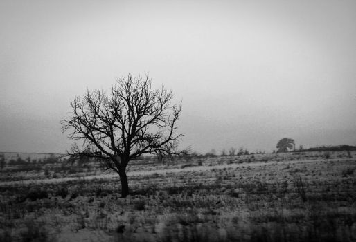 Lonely tree by arvael18