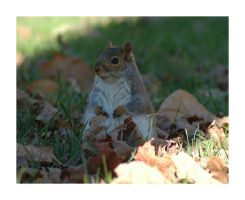 Tubby Squirrel by MightySquirrel