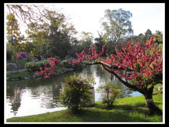Jardin Japones, Buenos Aires by newthunder