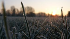 Frozen morning by grotgier