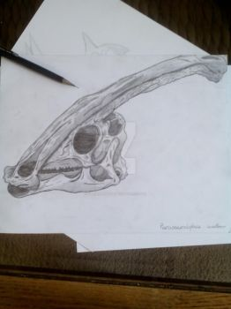 Skull of a Parasaurolophus walkeri by Stegoraptor