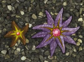 Staryu and Starmie