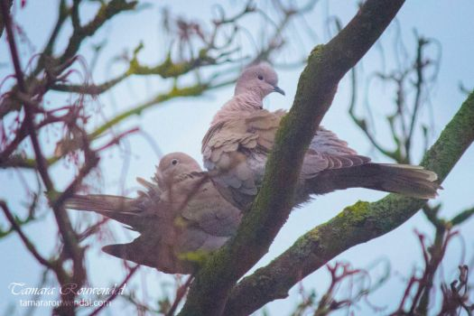Pigeon Lovers by TammyPhotography
