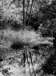 A watery grave... by thewolfcreek